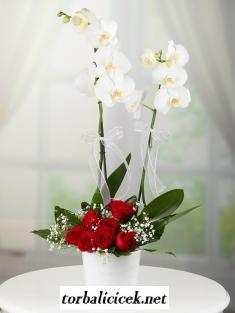 Çiftli Orkide ve Kırmızı Güller